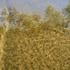 20101011093858-corfu