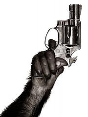 Monkey with Gun, New York City, Albert Watson