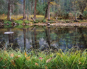 Grasses and Leaves, Fall, Merced River, Charles Cramer