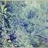 20101012162141-overgrown_garden
