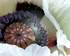 20101014074057-debra_kayata_oriental_poppy_intense_presevation