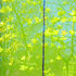 20101018184958-spring_burst_1