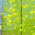 20101018185130-spring_burst_3