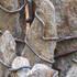 20101019124904-aequoris_muscus__fieldstone__steel-d1