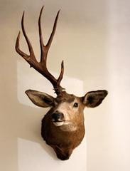 Hunting, Kerry Loewen