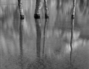 Four Cottonwoods, Sara Bateman