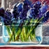 20101024032607-hyacinth_in_a_bowl