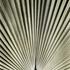 20101028175336-palm_leaf_study__encino__ca__2009