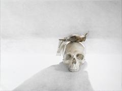 20101030150258-skin_and_bone_ii