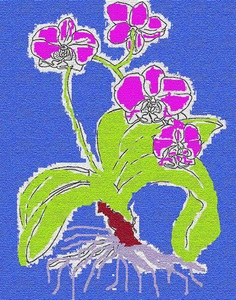20101101091549-orchid_big_one_2622x3336