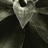 20101101155733-agave_attenuata__encino__ca__2009