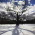 20101102205110-revelotion_tree_bart_zoni