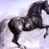 Arabian_stallion-0004
