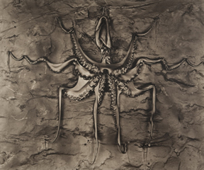 Black Octopus ,Gwen Akin and Allan I. Ludwig