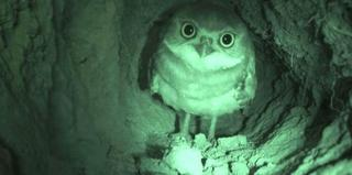 The Museum of Animal Perspectives (Burrowing Owl In Burrow), Sam Easterson