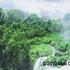 20101111143641-cohen_iguacu_falls