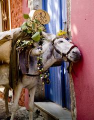 Smiling Donkey, Santorini, Glenn Steiner