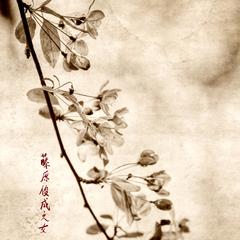 Cherry Blossoms, Brigitte Carnochan