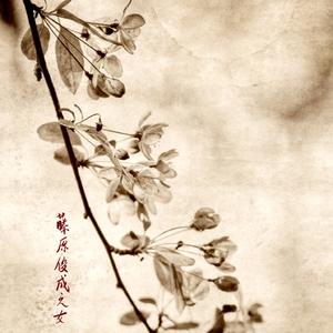 20101113133313-cherry_blossoms-sm