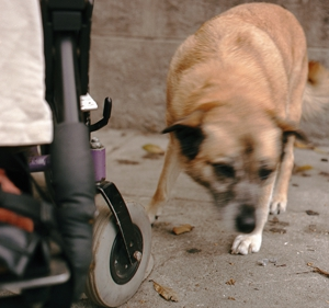 Kaya_with_wheelchair_wheel