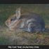20101123160609-rabbit1