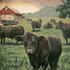 20101201110946-angusfarm