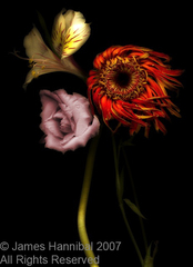 3flowerscopy