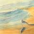 20101204141208-long_beach_bird_on_the_beach