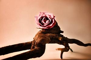 20101209171234-rose