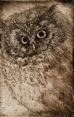 owl, Nu Ryu