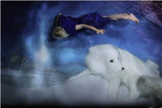 Lumikettu (Arctic fox) , Susanna Majuri