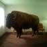 Buffaloimg_0206