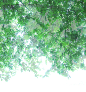 20101225141811-untitled_transparencies___tree_canopy_ginafuenteswalker_artslant