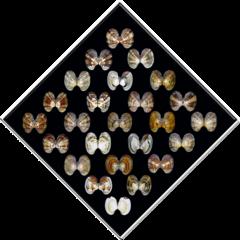 portraits di vongole 44001r, peter janssen