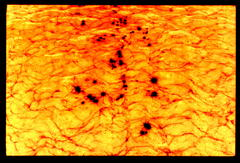 20101227090657-lava