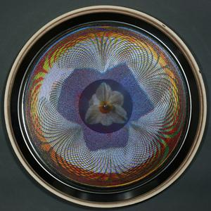 20101227132804-narcissus