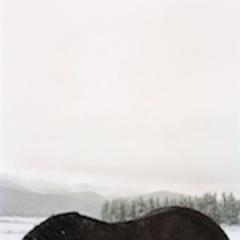 Horseback, Colleen Plumb