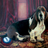 20110105084038-bernie_basset_and_bnp