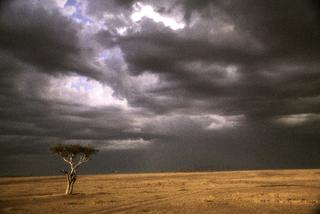 African Tree, Robert Farber