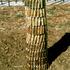 20110112045931-tree_of_life
