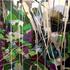 20110121143311-raking_light