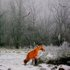 20110122072548-winter_fox2