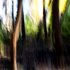 20110122123901-a_day_of_forest