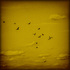 20110122134024-birds300dpi