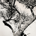 20110224094423-tree_lines__1