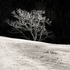 20110224094918-tree_lines__2