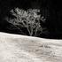 20110224094918-tree_lines__2