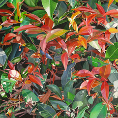 Red & Green Leaves, Astrid Preston