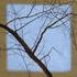 20110125125626-radiant_blue