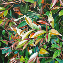 Spring Leaves,Astrid Preston